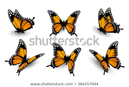 Fire Wings of Butterfly Stock photo © blackmoon979