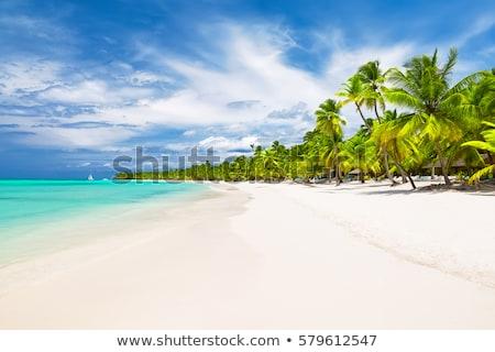 Napos idő trópusi homokos tengerpart pálmafák tenger édenkert Stock fotó © orensila