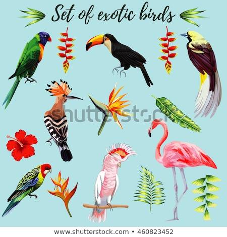 Tropikal kuş pembe flamingo dizayn doğum günü Stok fotoğraf © odina222