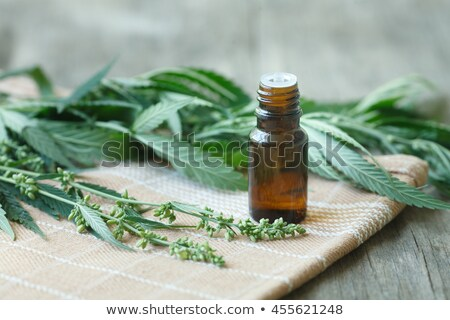 Stock photo: Medicinal cannabis seeds with extract