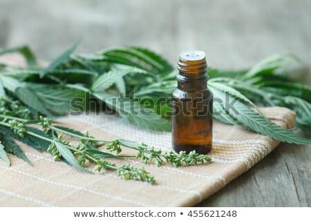 Stok fotoğraf: Medicinal Cannabis Seeds With Extract