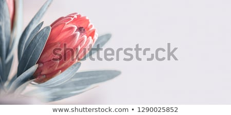 Extreme closeup of a beautiful flower. Stock photo © lithian