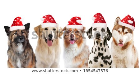 adorable group of five santa dogs of different breeds Stock photo © feedough