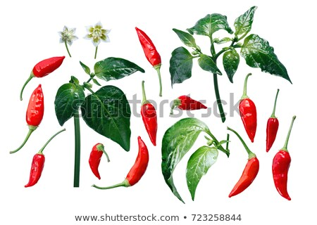 Aji Brazilian Bonanza pepper elements, paths Stock photo © maxsol7