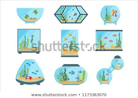 Vidro aquário conjunto diferente forma interior Foto stock © netkov1