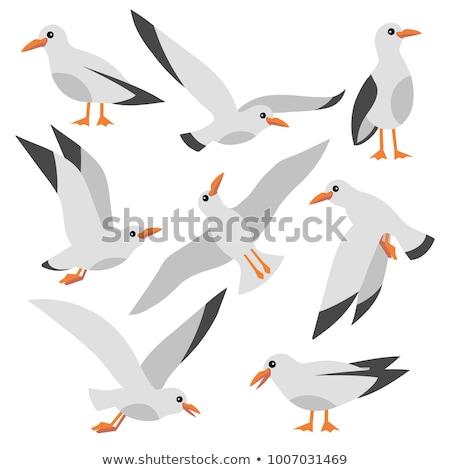 Stock photo: vector seagull sea gull set