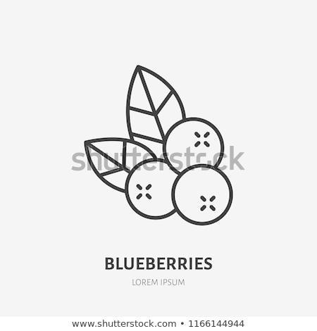 Szett gyümölcsök bogyók ikon szett skicc ikonok Stock fotó © nosik