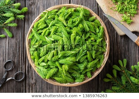 Preparation of herbal syrup from spruce tips stock photo © madeleine_steinbach