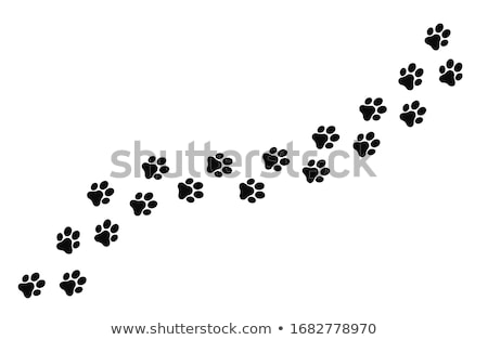 Paw Clip Art Design Vektor isoliert Illustration Stock foto © haris99