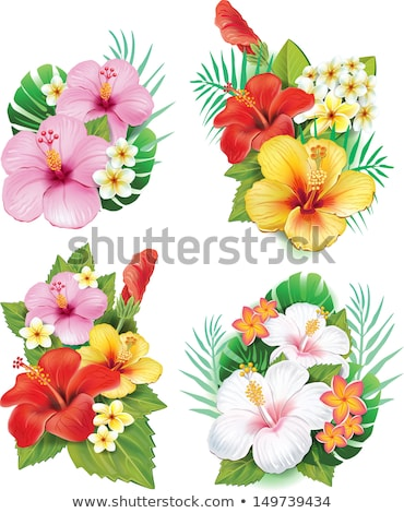 Plumeria (Frangipani) flower in the tropical rainforest Stock photo © boggy