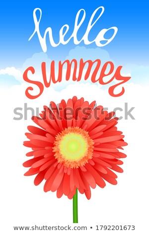 Hola verano tiempo decorativo flora flores Foto stock © robuart