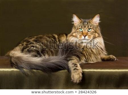 ママ · 子猫 · 猫 · 動物 · 再生 · 安全 - ストックフォト © catchyimages