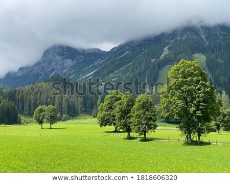 Pointing at wonderful landscape in the Alps Stock photo © lichtmeister