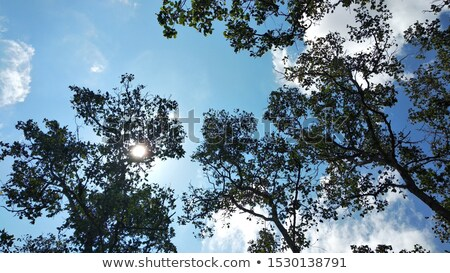 Coniferous forest in summer Stock photo © Alex9500