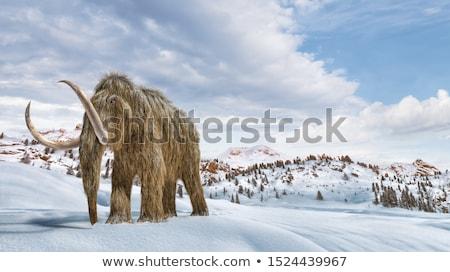 Cena ambiente neve realista 3D conjunto Foto stock © Pixelchaos