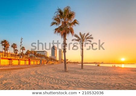 Trópusi pálmafák Barcelona Spanyolország kilátás fa Stock fotó © boggy
