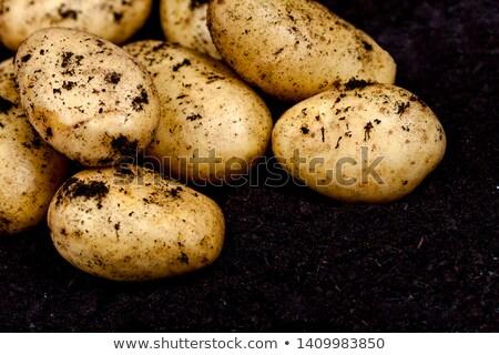 Recentemente batatas solo fresco alimentos orgânicos Foto stock © marylooo