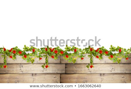 red berry decorated fence Stock photo © bobkeenan