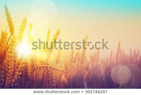 Sturm · Herbstlaub · Frau · Hand · Augen · Natur - stock foto © massonforstock