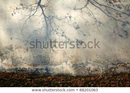 ツリー 影 レンガの壁 木の幹 赤 テクスチャ ストックフォト © bobkeenan