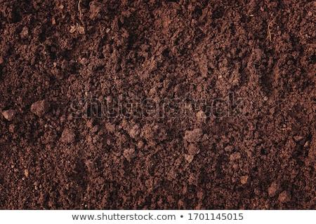 száraz · terep · barna · föld · természetes · mezőgazdasági - stock fotó © deyangeorgiev