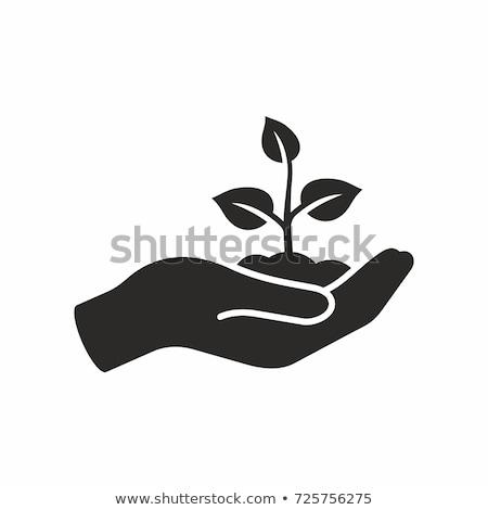 Ağaç simgeler eller el doğa dizayn Stok fotoğraf © almir1968