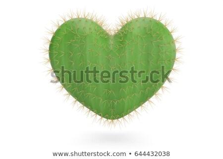 Prickly heart. Stock photo © Leonardi