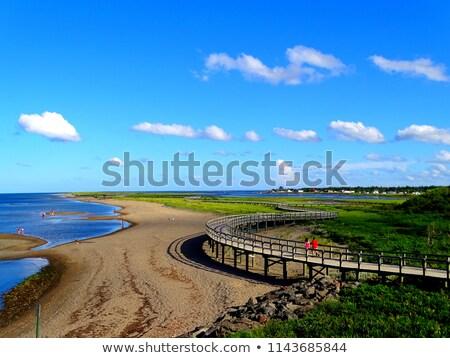 Kruchy wydma ekosystem siedlisko Zdjęcia stock © Discovod