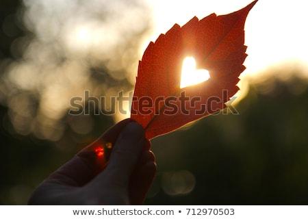 fa · ágak · forma · szív · illusztráció · naplemente - stock fotó © silkenphotography