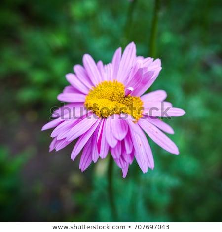 mutante · flor · abstrato · luz · fundo · quadro - foto stock © Nejron
