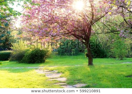 árvore · backlight · céu · sol · inverno · nuvem - foto stock © phbcz