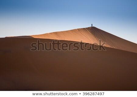 Oasis camellos sáhara desierto sol Pareja Foto stock © johnnychaos