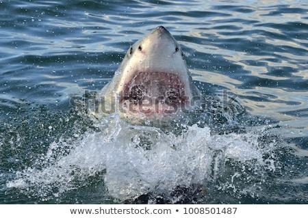 Wild shark swimming in the sea Stock photo © bluering