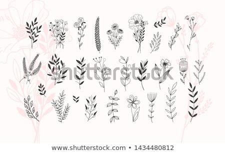 Vecteur contour simple fleur floral Photo stock © lissantee