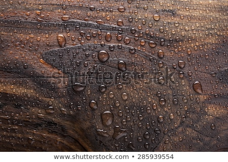 rain drops on wooden surface Stock photo © ldambies