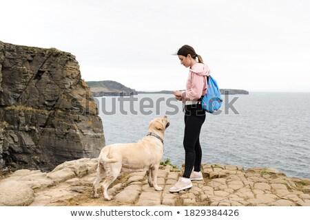 стране · собака · английский · бульдог · красный - Сток-фото © massonforstock