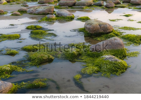 stones covered with seaweed  Stock photo © OleksandrO