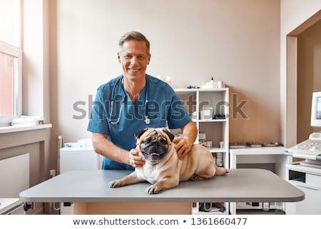 獣医 · 聴診器 · 犬 · 手 · 病院 · 薬 - ストックフォト © dadoodas