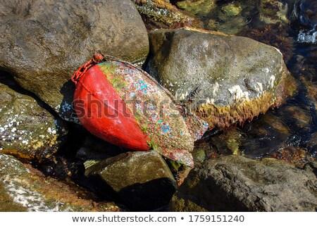 Boja wodorost podwodne obraz ocean niebieski Zdjęcia stock © lunamarina