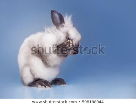 Little sad rabbit  Stock photo © Anna_Om