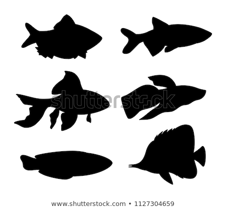 Gold Fish and Green Tiger Barb Vector Illustration Stock photo © robuart