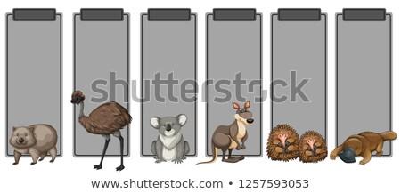 Ingesteld Australië dier grijs grens illustratie Stockfoto © bluering