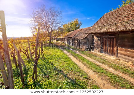 wine historic street vineyards and wooden cottages stock photo © xbrchx