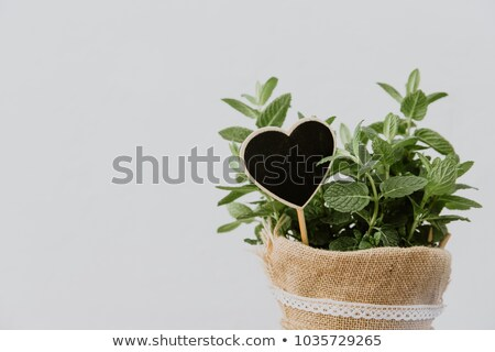 Green mint plant grow in a pot on wooden background Stock photo © sonia_ai
