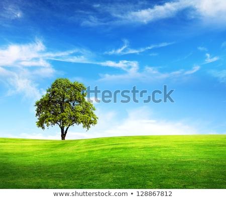 Meadow with Single Tree Stock photo © jamdesign