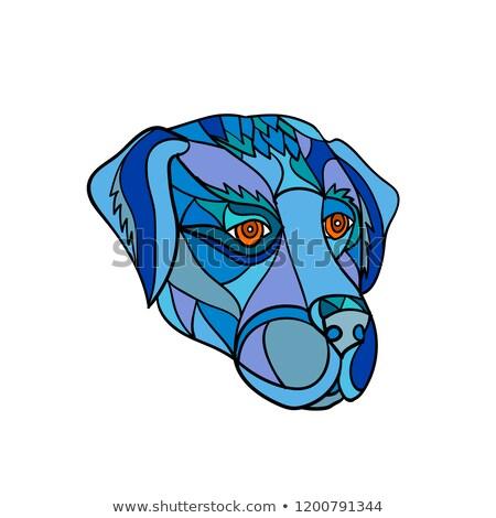 Labrador retriever hond hoofd mozaiek kleur laag Stockfoto © patrimonio