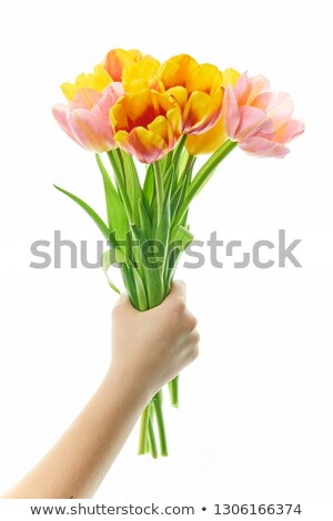 close up of man giving red tulip flowers to woman stock photo © dolgachov