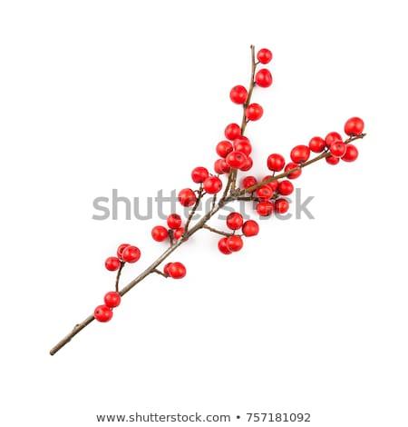 Vischio ramo rosso frutti di bosco Natale decorativo Foto d'archivio © odina222