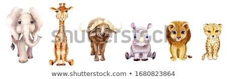 Desenho animado bebê leão isolado branco sorrir Foto stock © tigatelu