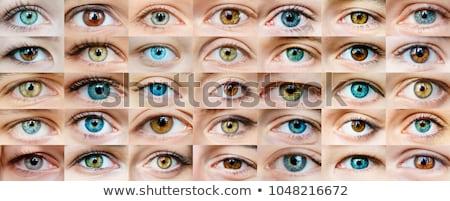 Female eye collection  Stock photo © adrian_n